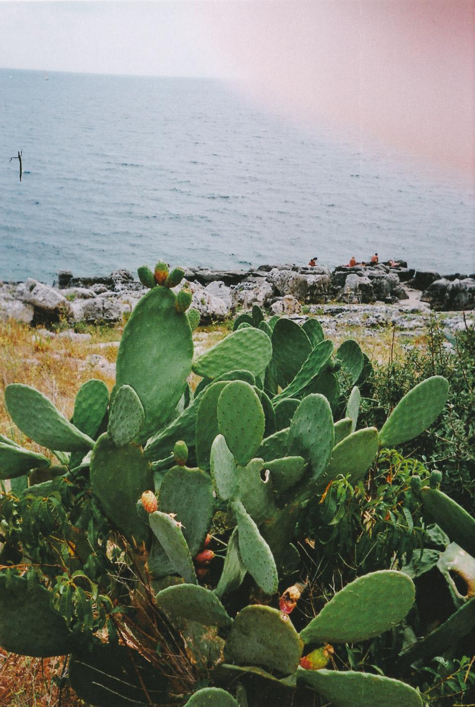 Cactus, Tricase Porto, Puglia // taken with a disposable camera