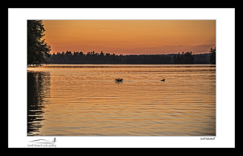 TWO LOONS AT DUSK