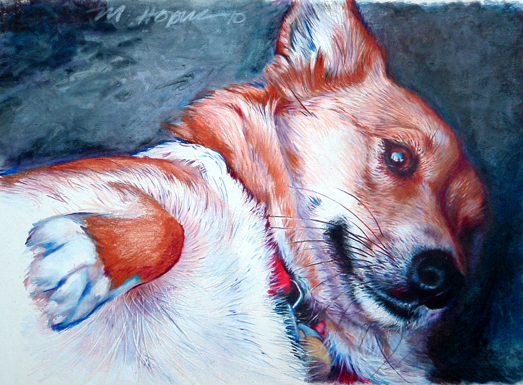 custom colored pencil portrait of Welsh Corgi
