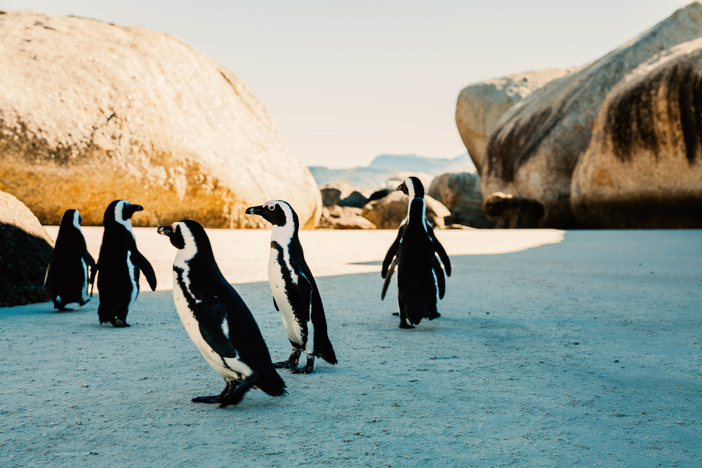 Boulders Beach /   S outh Africa