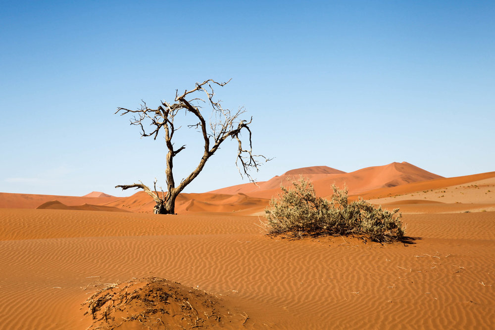 The Namib Desert / Namibia