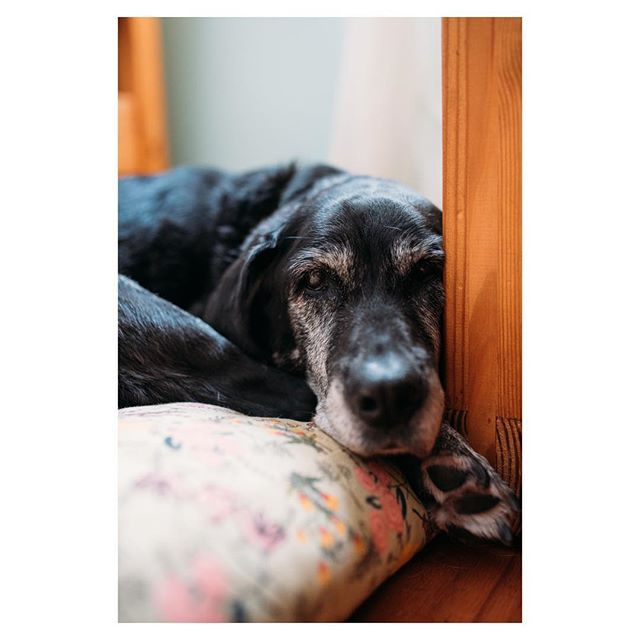 My old beauty saw her last sunrise this morning. She's been my girl for over half of my life. And she's the true definition of endless love. I love you sweet girl. 🐾