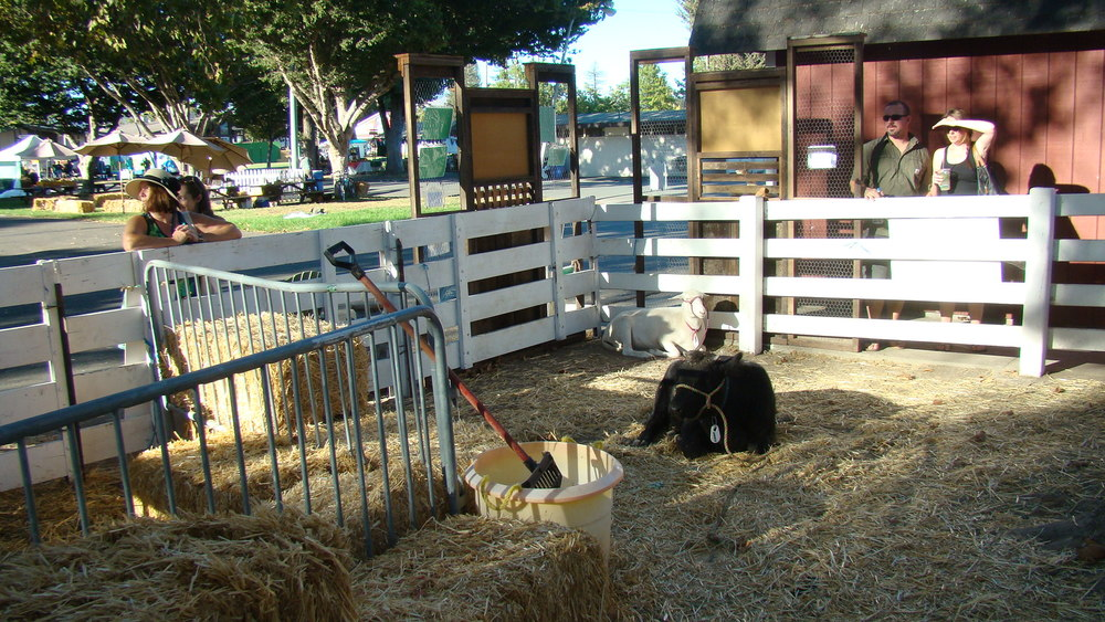 Heritage breed displays