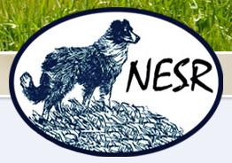 National English Shepherd Rescue