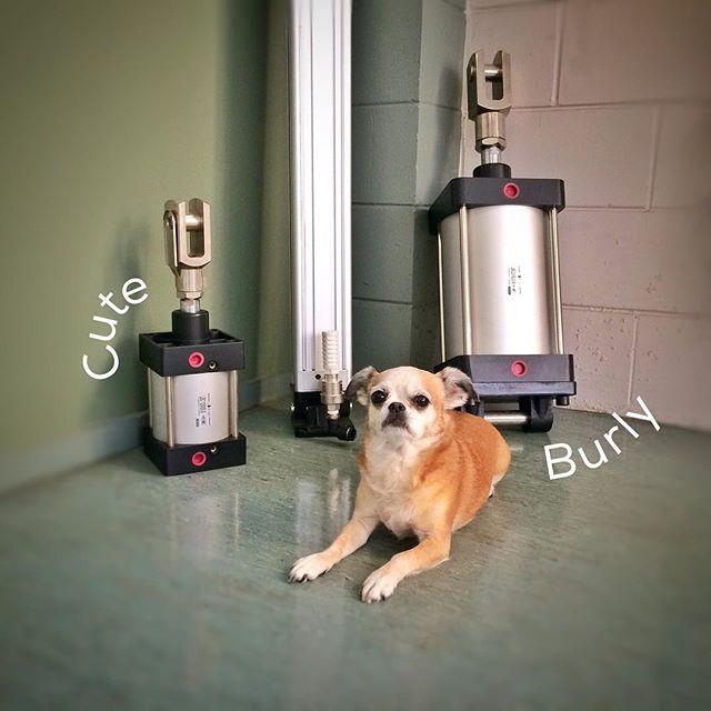 #cylinder #ram #bigcylinder #bigram #pneumaticcylinder #pneumaticram #wholesalepneumaticsnz #shopdog #dog