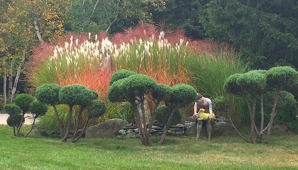 Serenity Gardens, Grass Garden