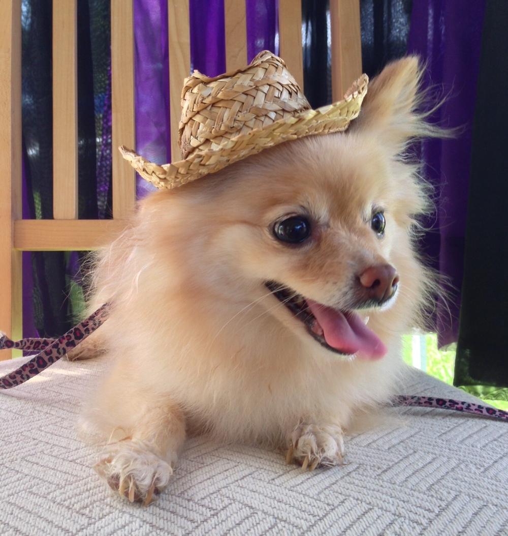 Hippie Dog Mex