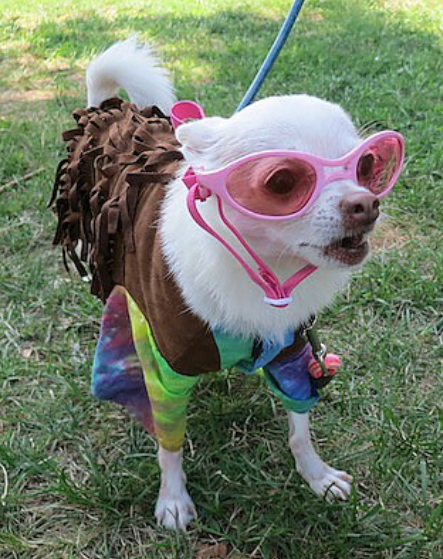 Woofstock2016HippieDog01.png