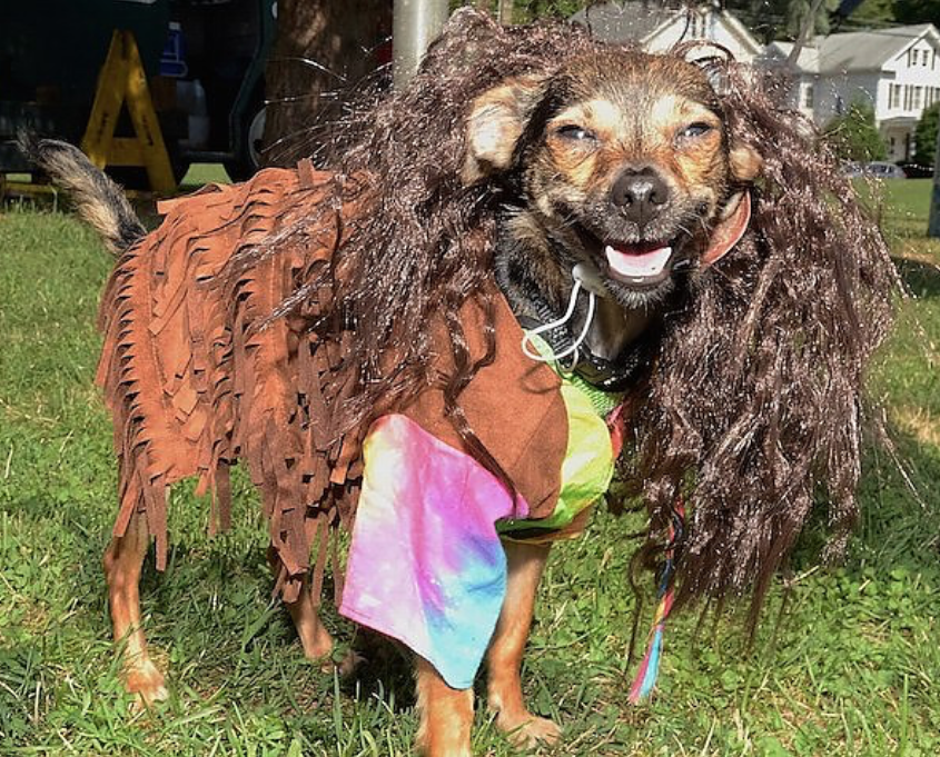 Woofstock2016HippieDog02.png