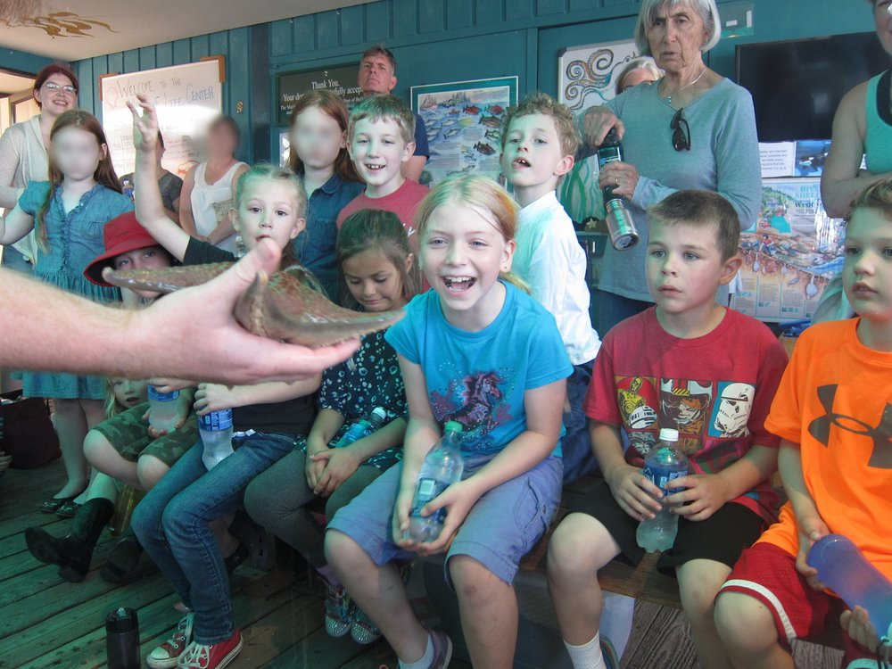 In this photo, Beach Elementary students visit the Marine Life Center as part of the Garden of the Salish Sea curriculum. View Garden of the Salish Sea's film Oystertopia: Stewards of the Salish Sea. This stunning film uses footage taken exclusively during Beach Elementary School workshops both on the beach located directly in front of our school and in the classrooms.