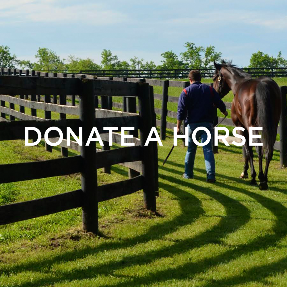 donatehorse.png