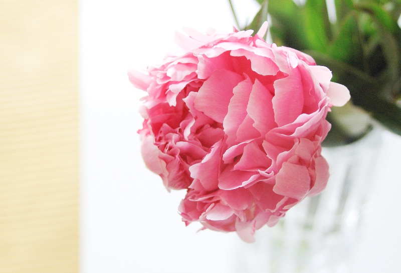 LivingRoom_PinkPeony