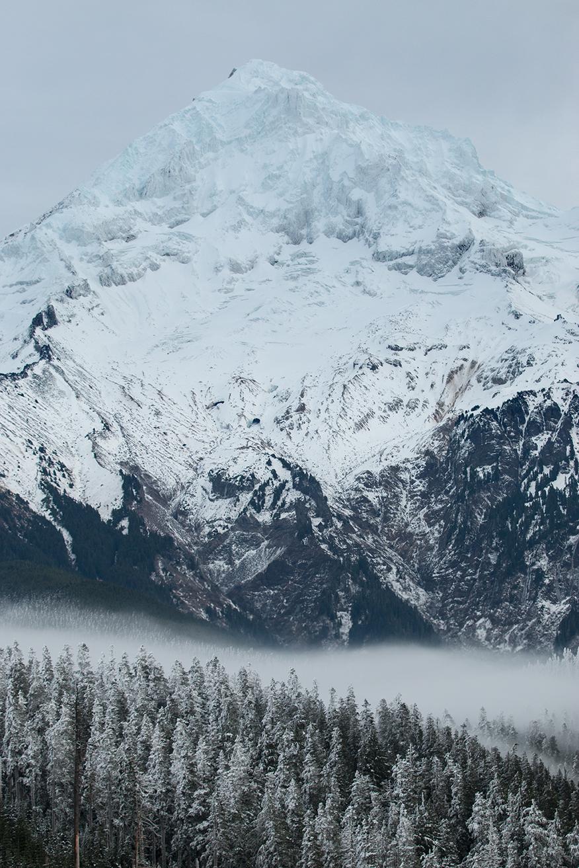MtHood_FoggyTrees2web.jpg