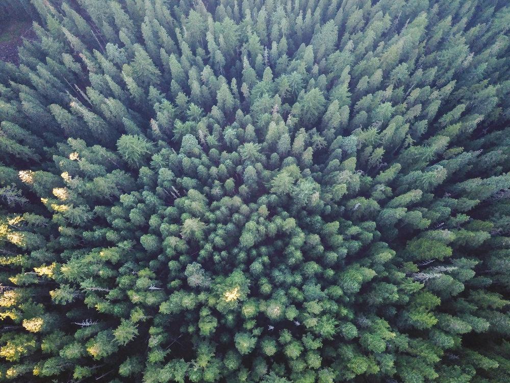 Serene_Landscapes-0002.jpg