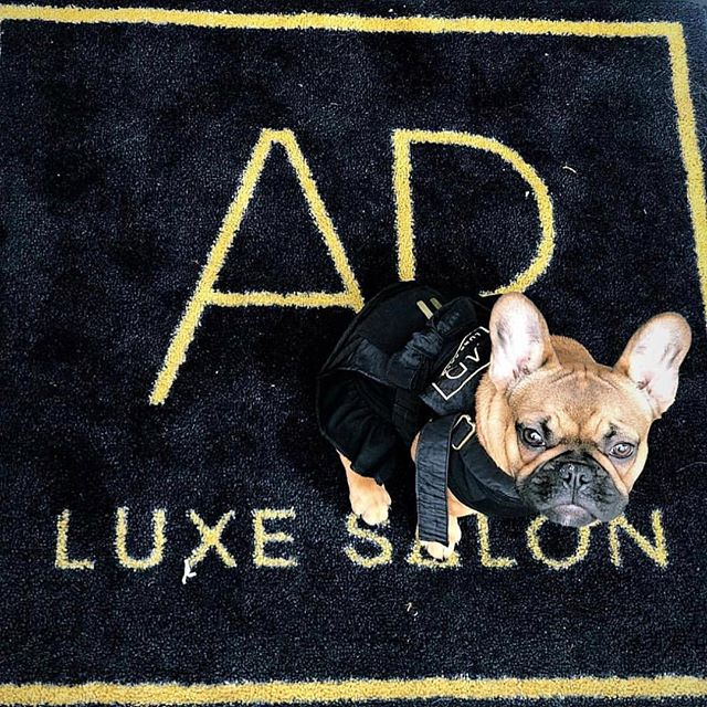 LUXE our fave employee! #apluxegirl #apluxesalon #champagnecampaign #luxelife #dogsalon