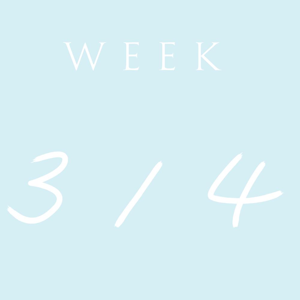 week 2 (1).png