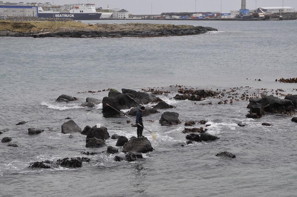 Við glúpi ber til at fanga smáar fiskar og rækjur, sum liva inni við land.Mynd: Hans Eli Sivertsen, Føroya Sjósavn