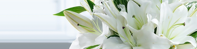 What do Lilies mean?     There are a few different meanings for the Lily which can vary on type, however, one of the most common connotations is humbleness and devotion, with this meaning you can express your devotion to your loved one through a bloom.