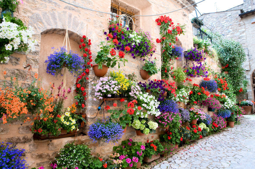 Hanging Baskets -