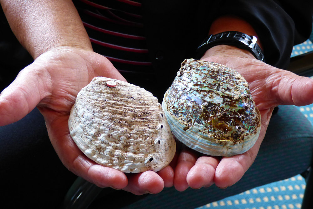 Comparison of erosion of empty paua shells (i.e. without the live animal) after four months in low pH (7.65; shell on the right), and ambient pH seawater (shell on the left).