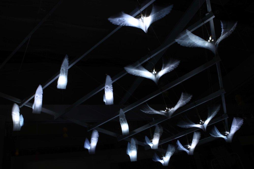 Flying Lesson Birds flying .jpg
