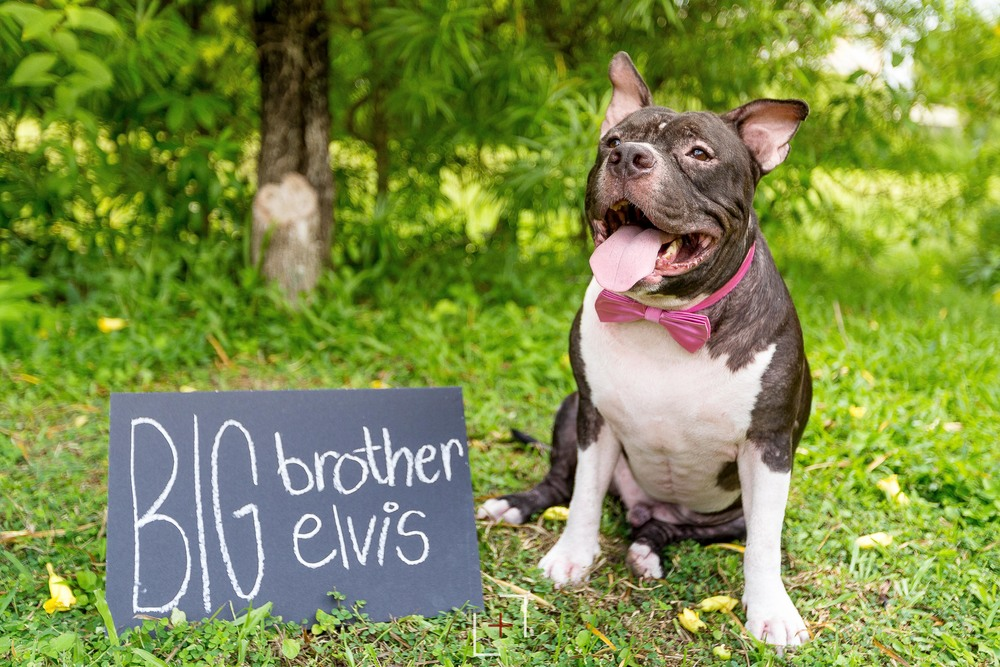 Elvis, the gentle giant and huggable chubby cuteee