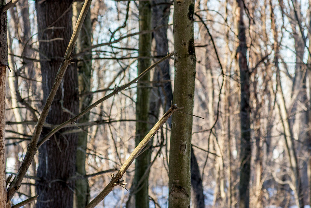 Woods Walk 02-20-2017-Chris-Page-125.jpg