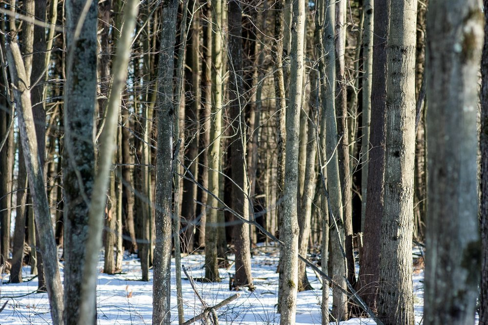 Woods Walk 02-20-2017-Chris-Page-129.jpg