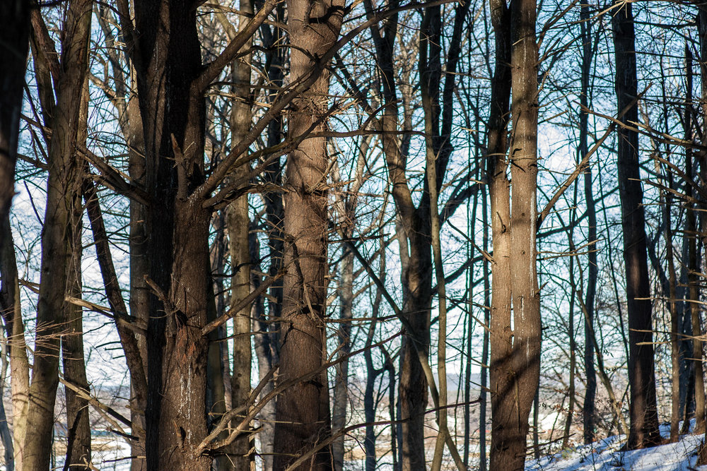 Woods Walk 02-20-2017-Chris-Page-119.jpg