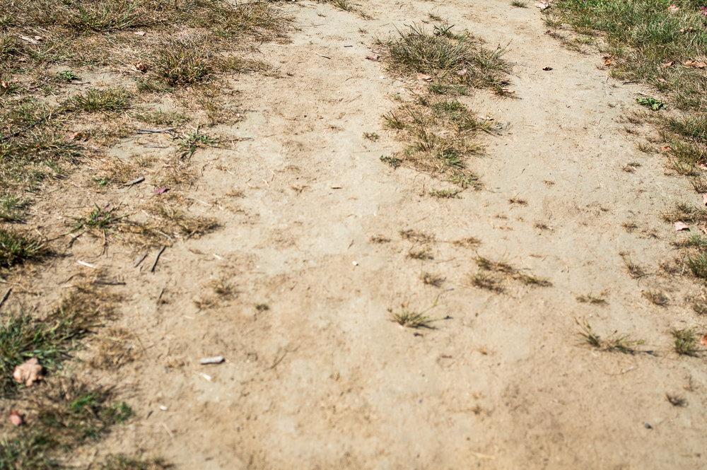 walk 09-25-2017—Chris-Page-Art-9.jpg