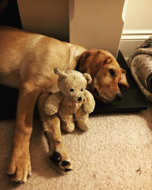 Bear with his bear