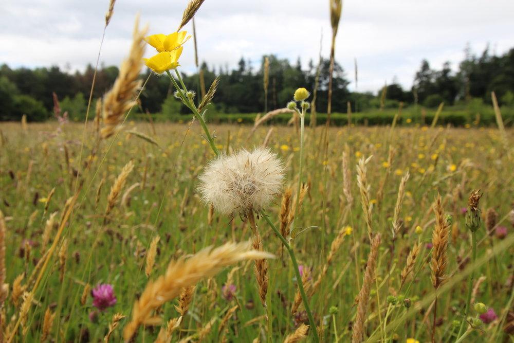 Natural+meadow.jpg