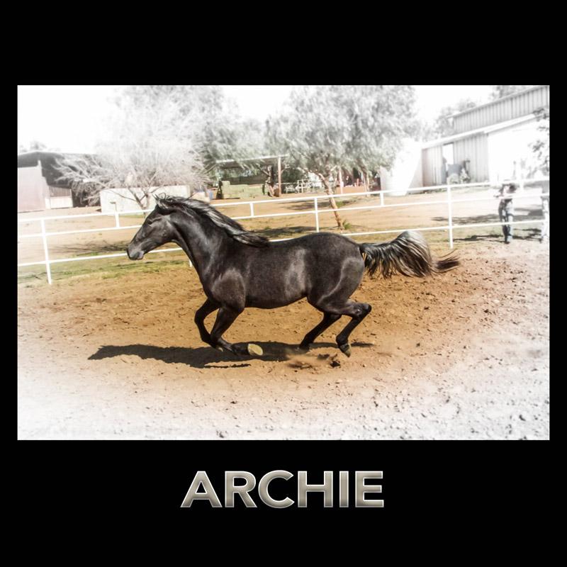 rr-TILE-archie.jpg