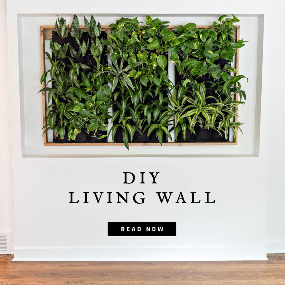 DIY-living-wall.jpg