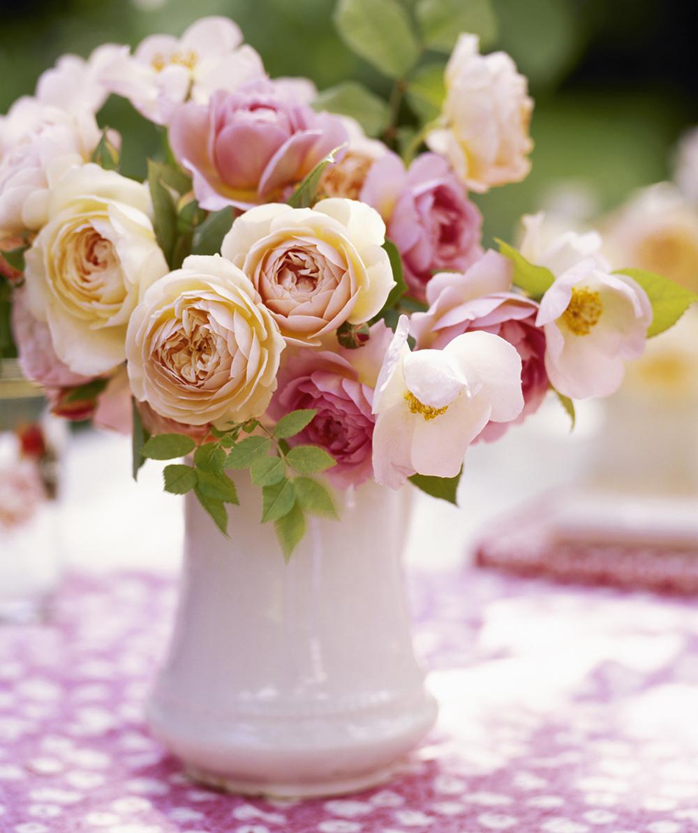 David Austin Roses copy.jpg