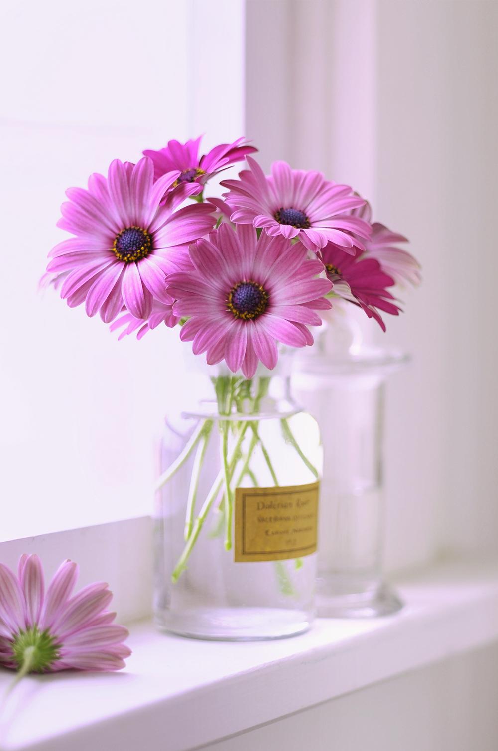 pink daisys.jpg