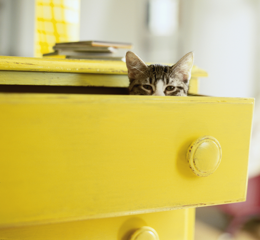 kitty in a yellow dresser.jpg