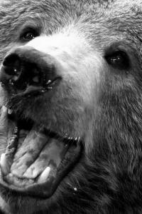 bear2.jpeg