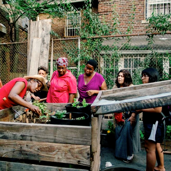Brooklyn residents working on a community herb garden