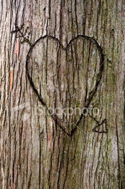 ist2_3135017-heart-carved-in-a-tree.jpg