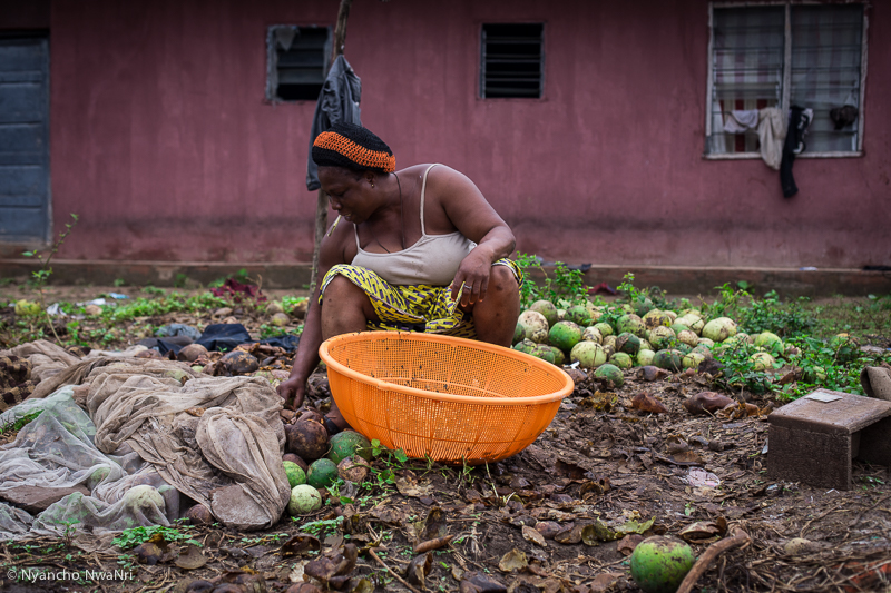 A woman harvests melon seeds for sale. Benue, Nigeria. 2017