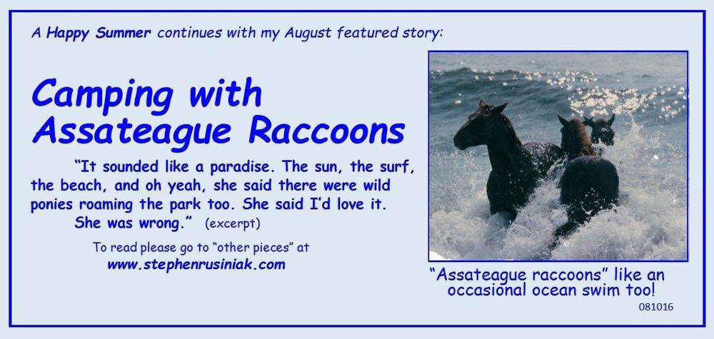 Camping with Assateague Raccoons 081016.jpg