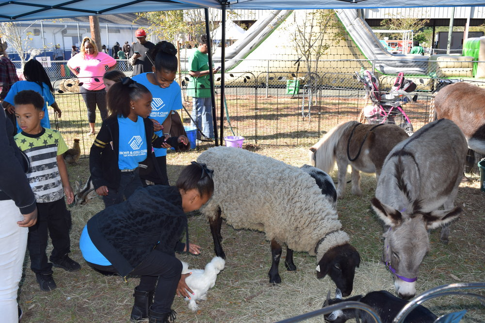 2016: Collard Green Festival at Woodland Boys & Girls Club Farm