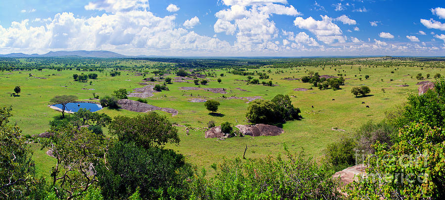 Example of a Savanna landscape