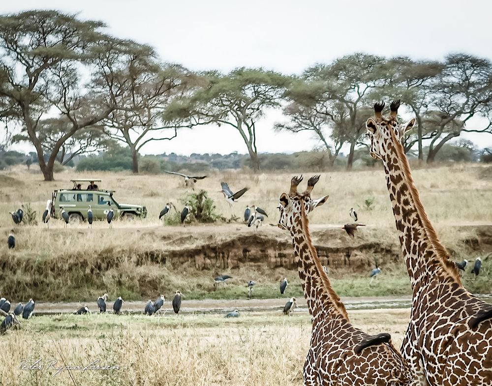 Africa - Kilimanjaro Full Album-62.jpg