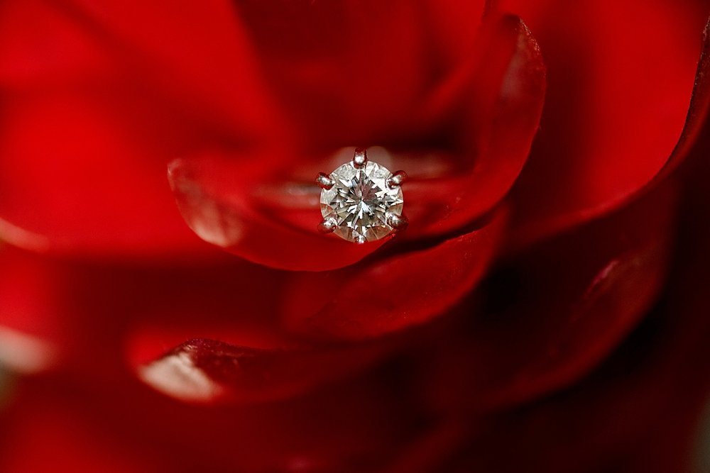 Diamond solitaire ring on a red rose