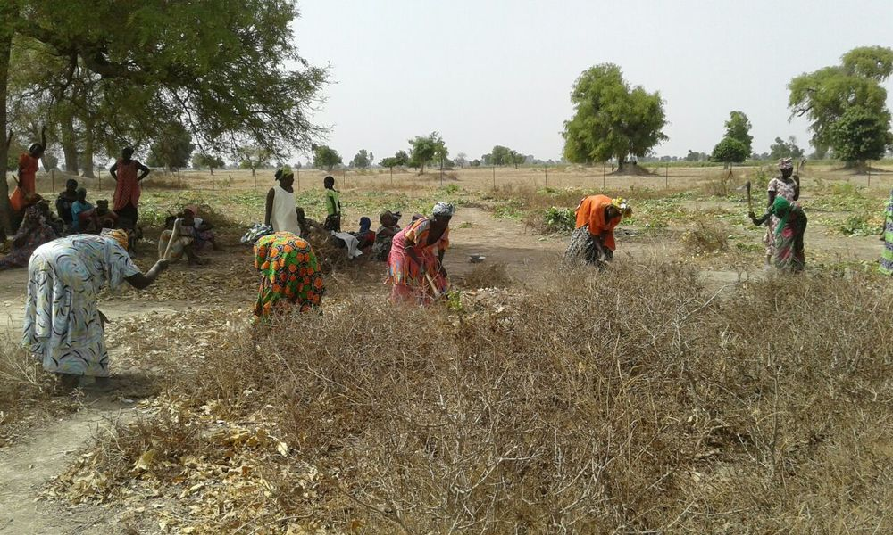 Members of the cooperative clearing weeds and preparing the land that will be planted soon.