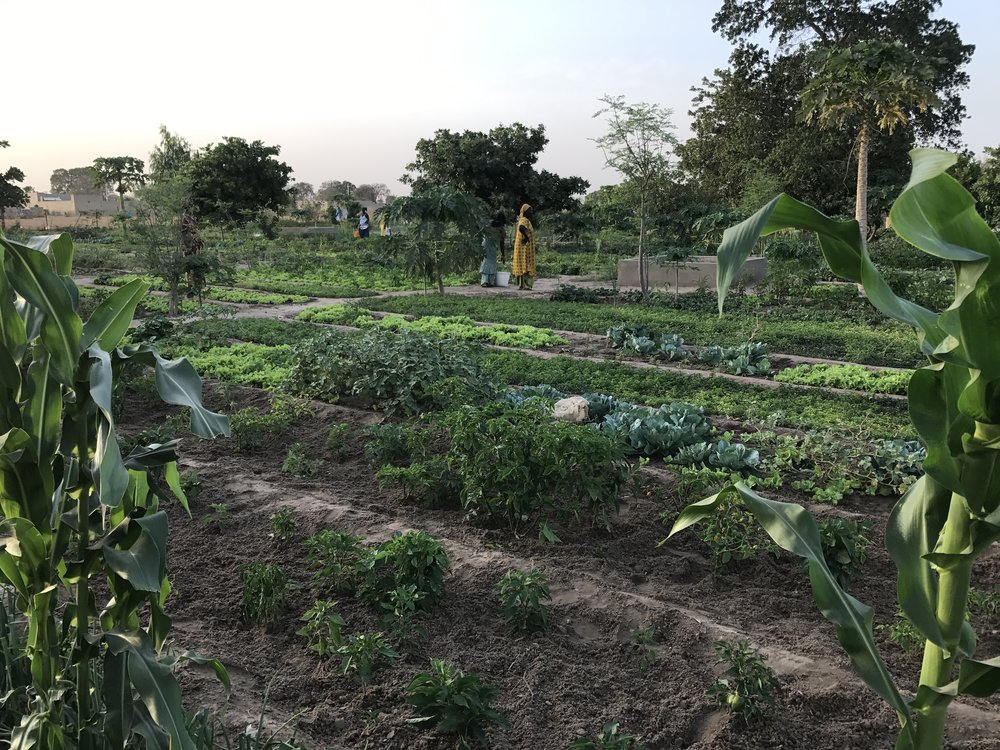 The thriving Ngor Marone Market Garden