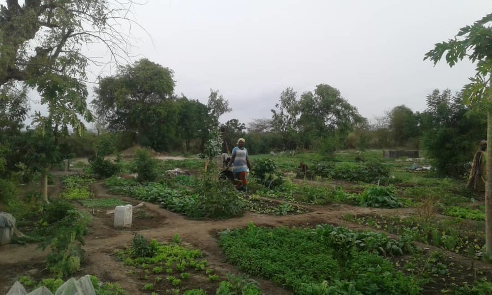 At work in the Ngor Marone Market Garden