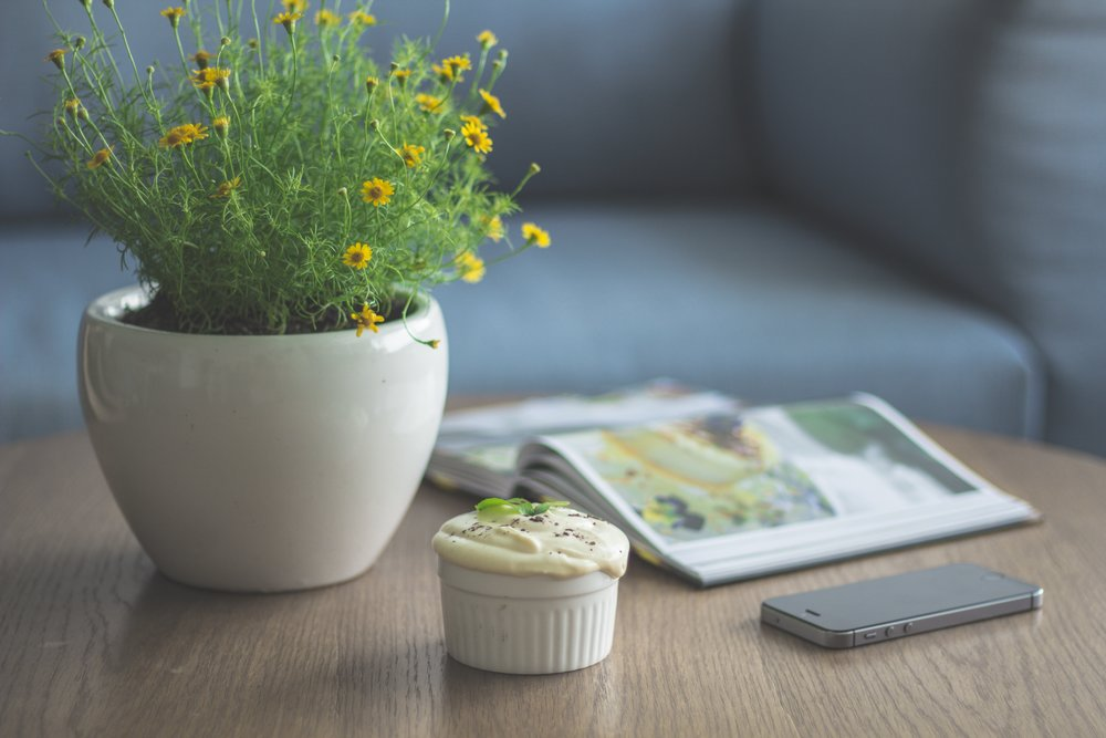 book-decor-decorative-plant-48012.jpg